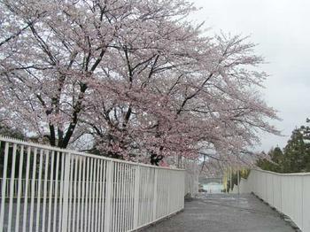 20040404bampaku.jpg